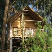 Agapanthus treehouse