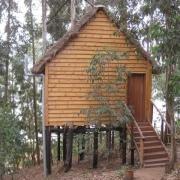 Agapanthus treehouse lake bunyonyi