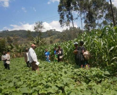 Farming God's Way Crops Growing