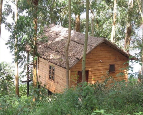 Marigold treehouse lake bunyonyi