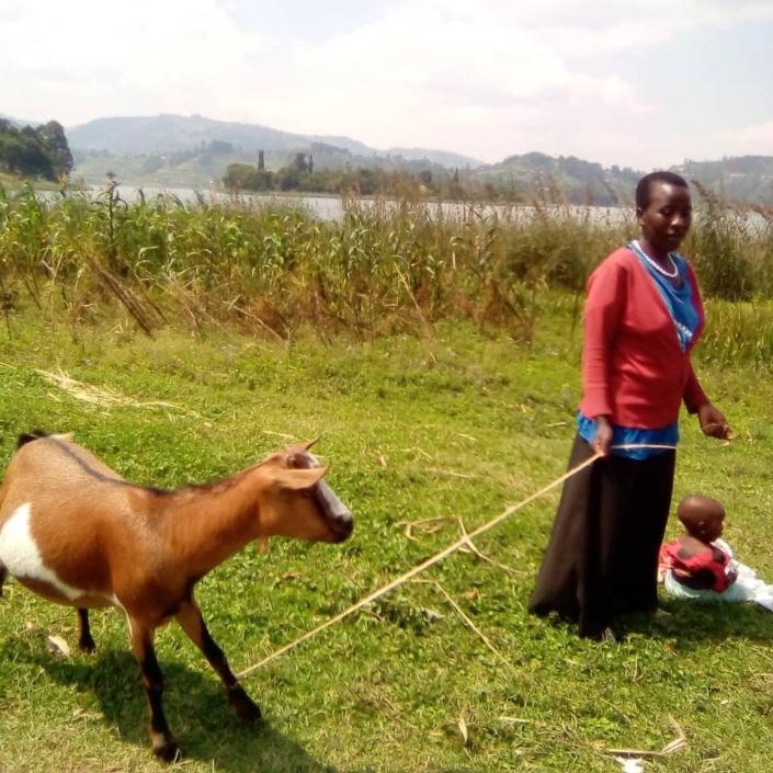christmas gifts 2020 goats 15