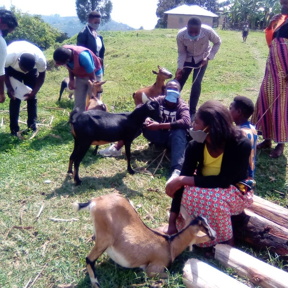 christmas gifts 2020 goats 18